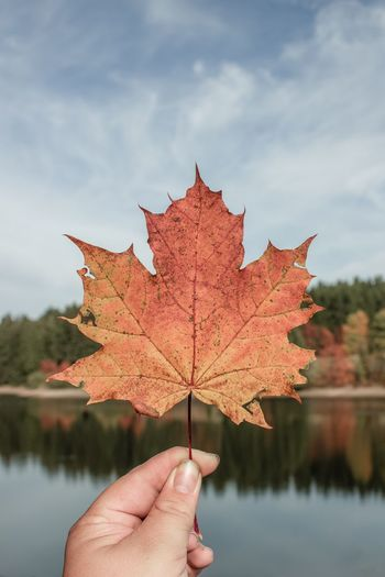 One maple leaf 🍁 EyeEm Selects Human Hand Hand Human Body Part Autumn One Person Autumn Mood Leaf Plant Part Personal Perspective Tree Finger Human Finger Change Holding Maple Leaf Body Part Nature Unrecognizable Person Real People Plant Close-up