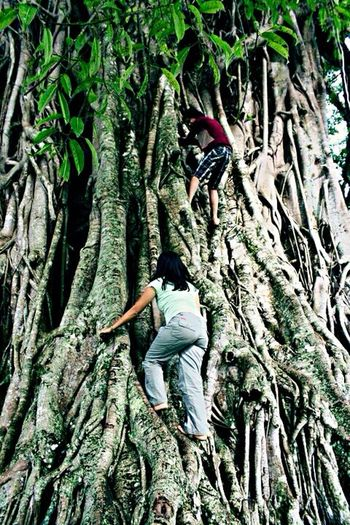 Hugging Trees Climbing Trees Treescollection