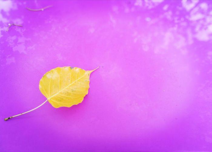 Yello Leaves