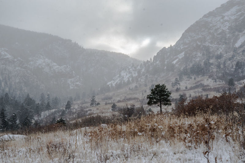 Landscape - Snow Upon the Land Beauty In Nature Cheyenne Canyon Park Colorado Colorado Springs, CO Day Forest Landscape Meadow Meadow Snow Mountain Nature No People Outdoors Pinaceae Pine Woodland Rocky Mountain Foothill Scenics Sky Snowy Day Snowy Days... Tree Winters Day
