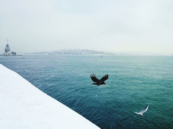 Animal Wildlife Istanbul Turkey Bosphorus, Istanbul Snow Water Nature Sea Tranquility Outdoors Animal Themes Animals In The Wild Sky No People Cold Temperature Insect Day Beauty In Nature Perching
