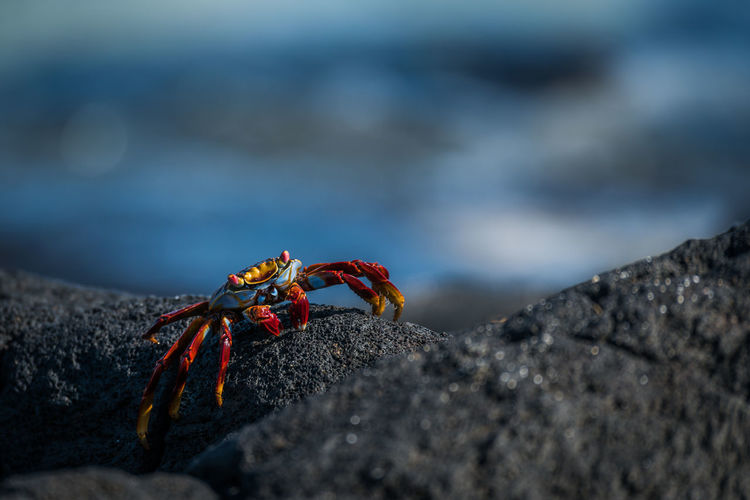 Close-up of crab on rock at beach