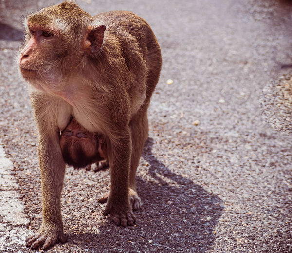 View of a monkey on street in city