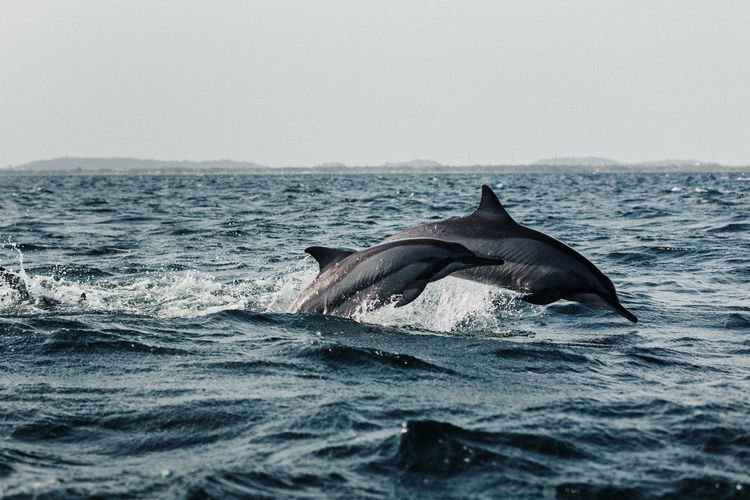 Dolphins At Sea Against Sky