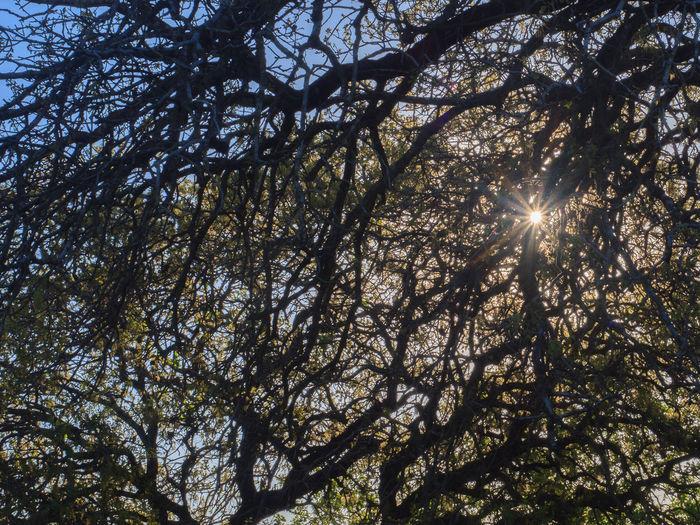 The sunlight