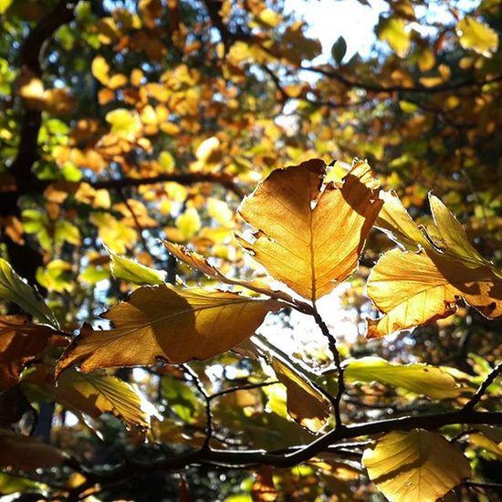 Bursa Uludag Millipark Sonbahargüneşi Sonbahar Yaprakdokumu Yaprakdökerbiryanımız Biryanımızbaharbahçe