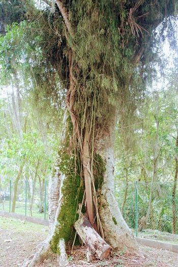Bosque ,Parque