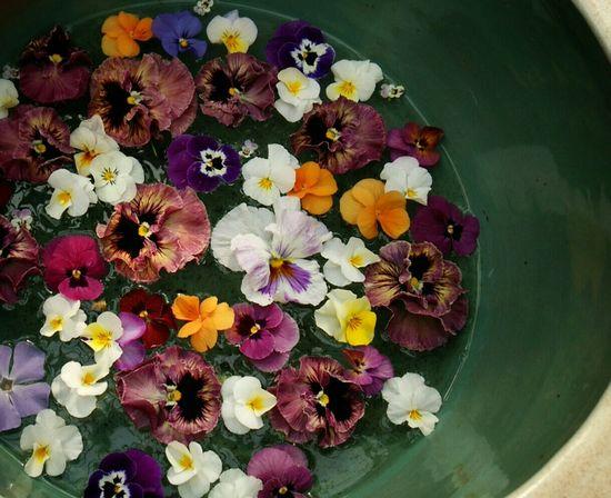Nature_collection Flowerporn Flower Nature EyeEm Nature Lover Flower Collection Flowers,Plants & Garden 花と庭 自然