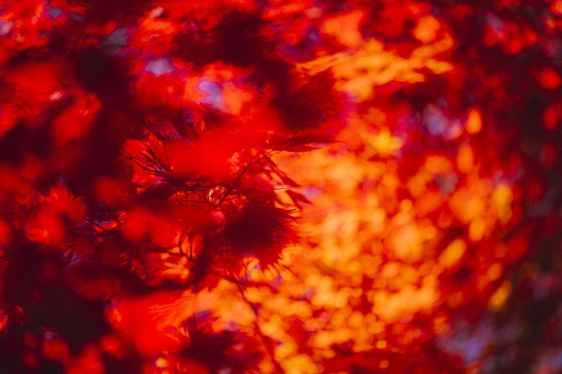 Full frame shot of autumnal tree against orange sky