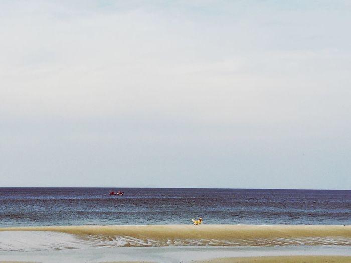 Taking Photos Enjoying Life Playa Uruguay Life Is A Beach Sea And Sky Sand & Sea Landscape Water Reflections Boat Art Of Fishing Golden Retriever