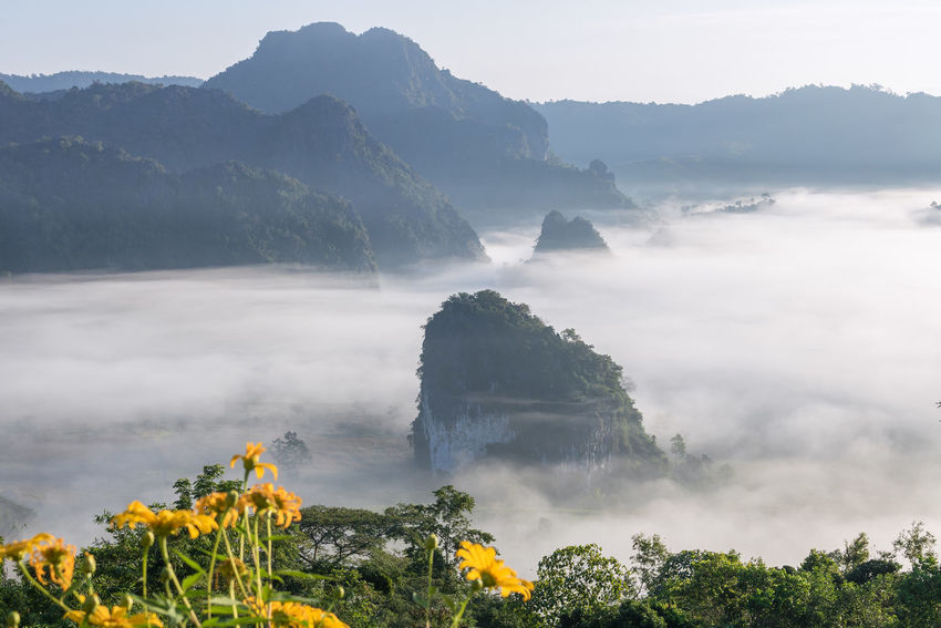 The Mist and Sunrise Time with Maxican SunFlower, Landscape at Phu Langka, Payao Province, Thailand Beautiful Blackground Camping Family Morning National Park Thailand Yoka Amazing Clouds And Sky Colorful Flower Fog Forest Landscape Maxican Sunflower Mist Mountain Nature Park Sun Sunrise Tent Wallpaper Women