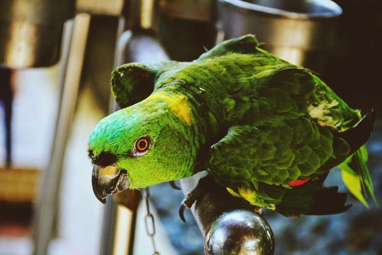 Kaohsiung Bird