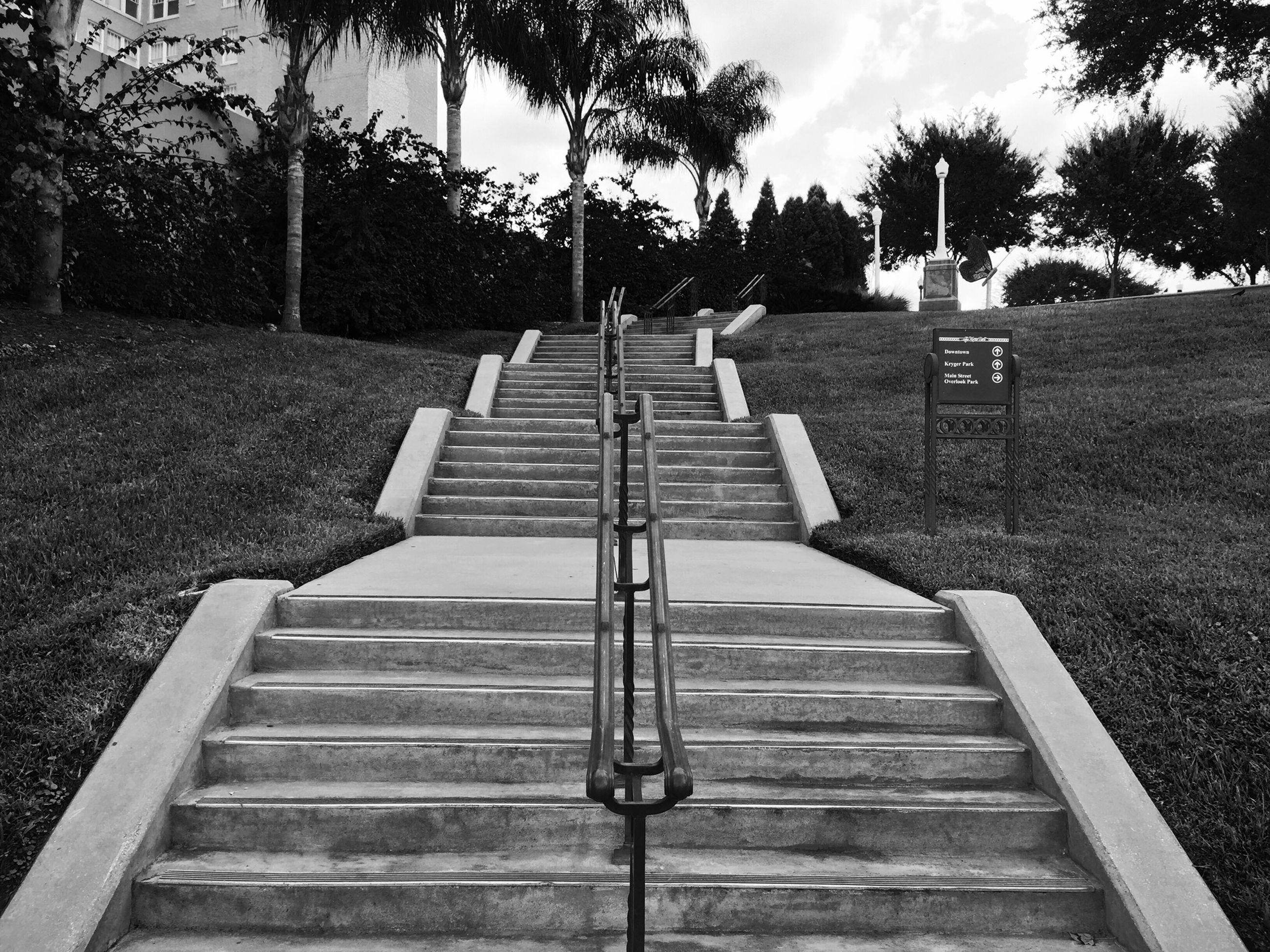 tree, steps, bench, the way forward, railing, empty, steps and staircases, sky, absence, sunlight, staircase, park - man made space, day, outdoors, shadow, grass, wood - material, park bench, nature, tranquility