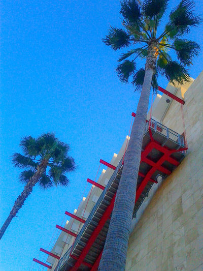 Beach Clear Sky Culture Development Exterior Incidental People Lacma Los Angeles County Museum Of Art Low Angle View Outdoors Palm Tree Structure Summer Tropical Climate Vacations Uphill Battle