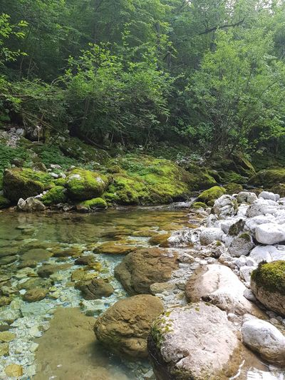 Water Nature No People Day Outdoors Tranquility Pebble Beauty In Nature Close-up Clean Water Stones