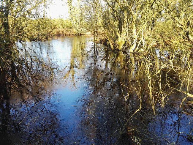 Cumbrian Walk Woodland Walk Reflections Serenity