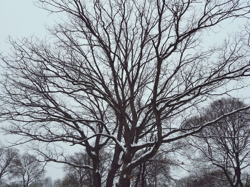 Detroit is Beautiful... Low Angle View Branch Tree Nature Bare Tree Growth Day Sky Backgrounds No People Outdoors Beauty In Nature Full Frame Tree Trunk Mobility In Mega Cities