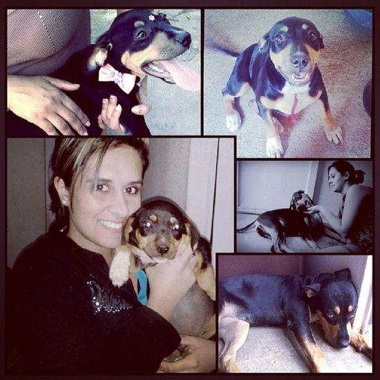 Antes e depois da minha negona, macaca, fidida, minininha, forgada, ciumenta, manhosa, malandra, arteira, cachorra, amor da minha vida Princesa Amô 9meses