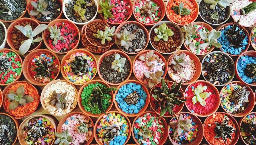 Full frame shot of succulent plants for sale in market