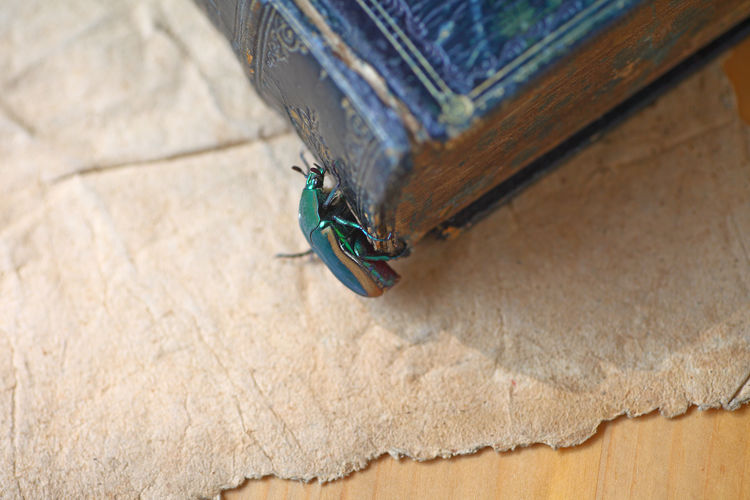 Green beetle clings to vintage book Animal Insect No People Close-up Day Wood - Material Nature Green Beetle Shield Bug Vintage Books Copy Space Room For Text Overhead Natural Light Studio Shot Nobody Indoors  Perching Resting