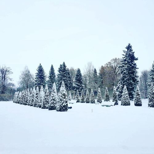 Winter Tree Snow No People Forest Winter Nature Cold Temperature Evergreen Tree Coniferous Tree Landscape Mountain Day Snowing Outdoors Sky
