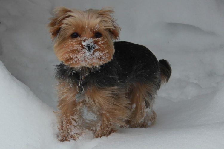 Dog Dog Canine