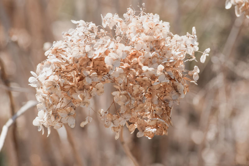 Beautiful Beautiful Nature Flowers Fragile Fragility Nature Nature On Your Doorstep Shrub Shrubs Flower Ball Delicate Flowers Delicate