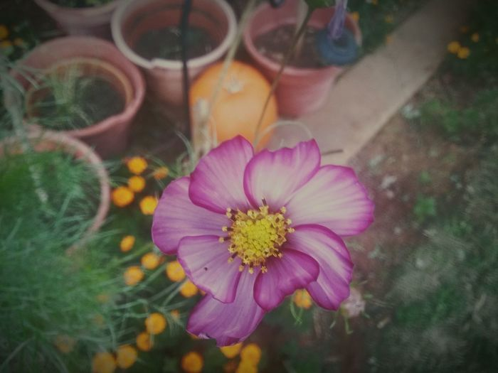 Nature_collectio
