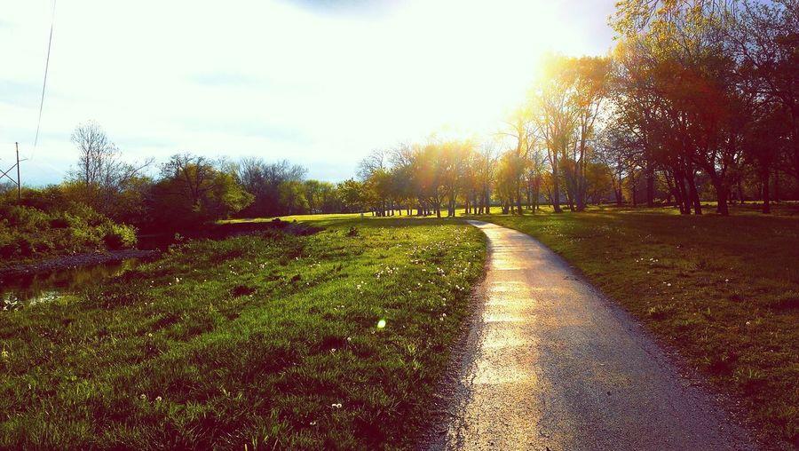 Nature Trail Path Spring Trees Sun Green Summer Sunset Life Peaceful