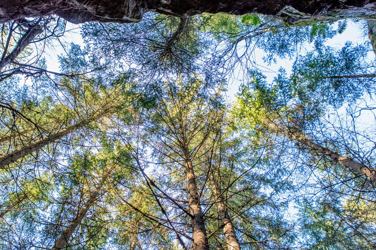 Beauty In Nature Day Forest Low Angle View Nature No People Outdoors Sweden Tree