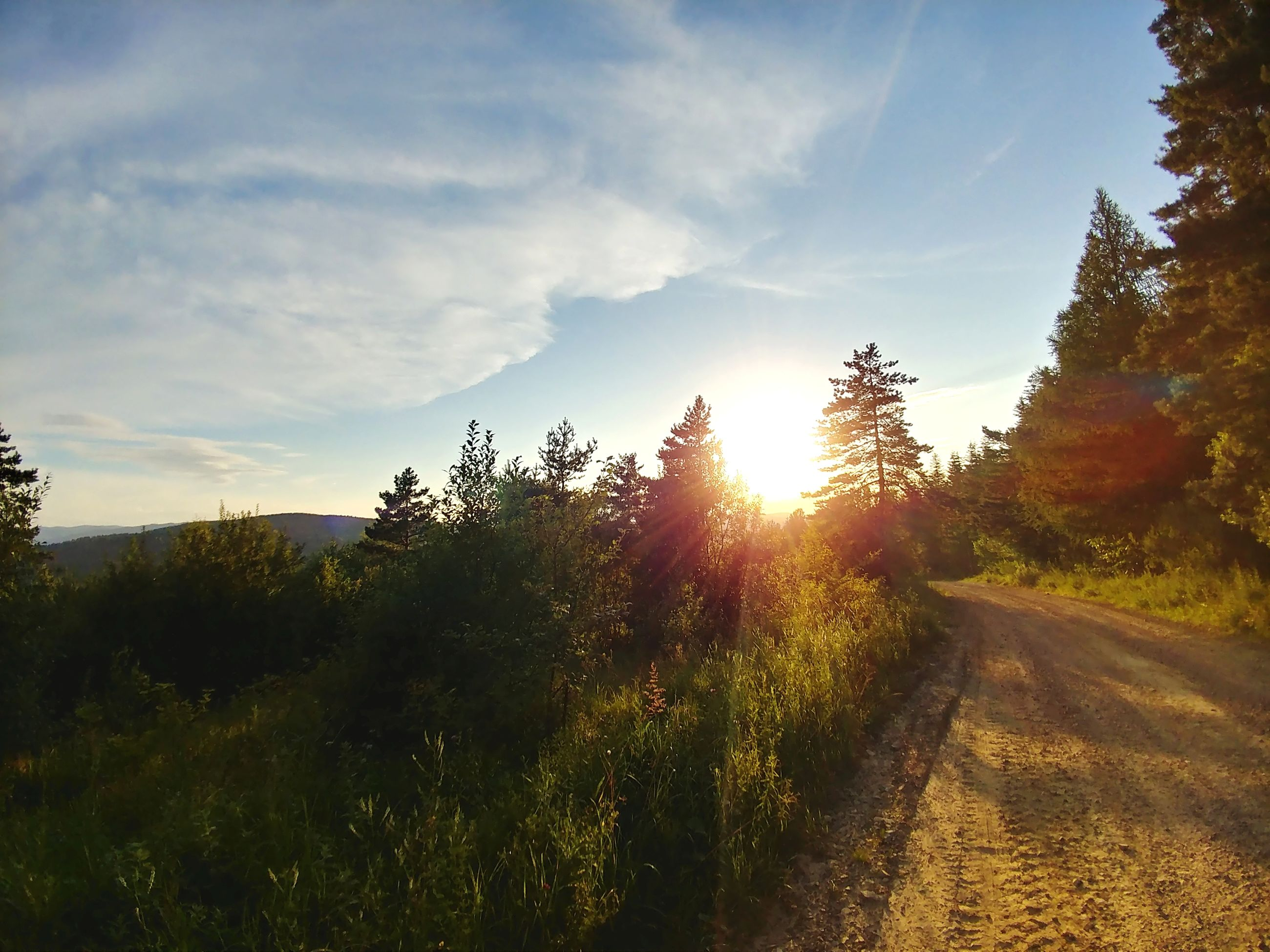 sky, plant, tree, sunlight, direction, nature, cloud - sky, road, beauty in nature, transportation, tranquility, tranquil scene, sun, landscape, the way forward, no people, growth, non-urban scene, sunset, environment, lens flare, outdoors, bright