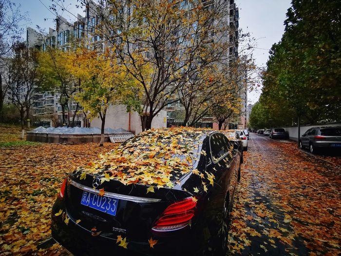 autumn Multi