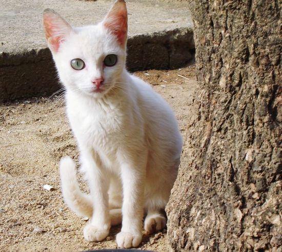 Cat Gato Filhote Gatobranco