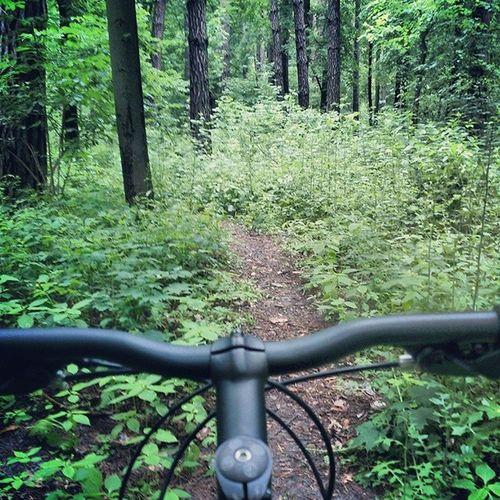 Чем дальше в лес, тем меньше вылез вело вело_фото Киев пуща bicycling insta_cycling kiev rain дневник_наблюдателя forest