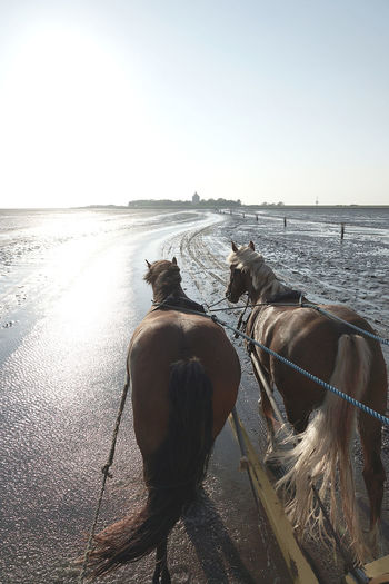 View of horse in sea against clear sky