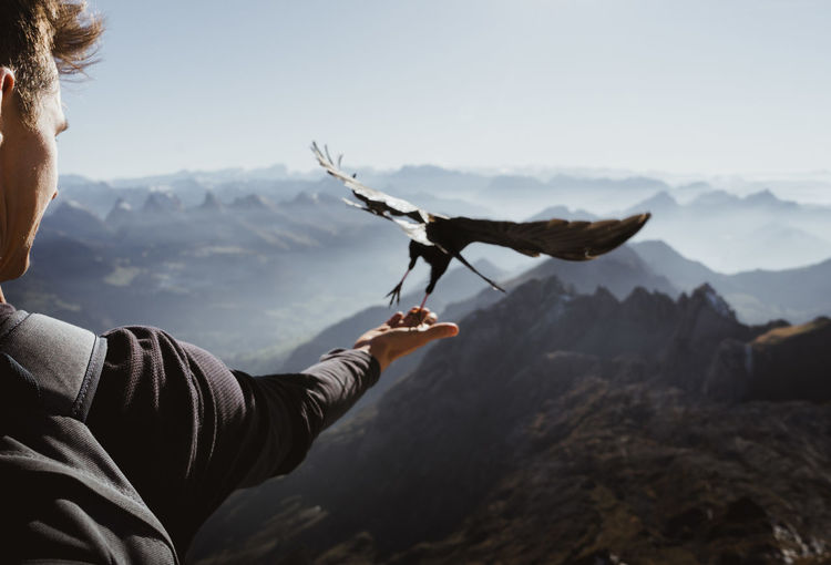 Close-up of hand holding bird against mountain