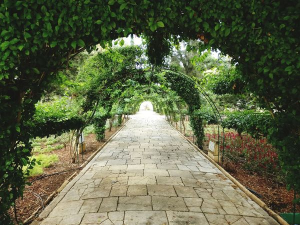 No People The Way Forward Travel Destinations Somewhere Only We Know Green Tunnel Peace & Quiet