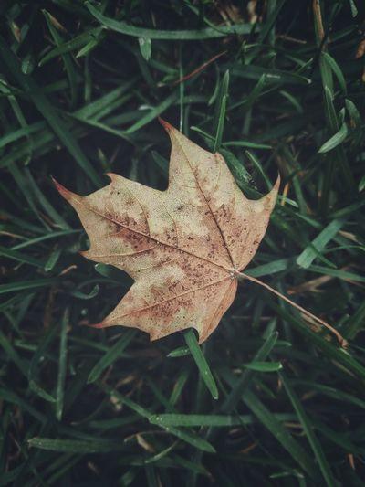Autumn Single
