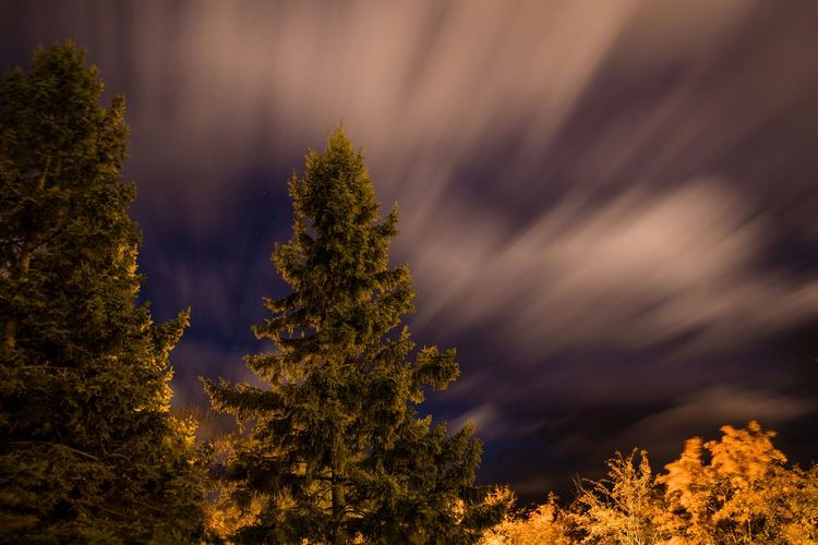 Pine trees against sky during night