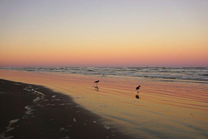Stunning sunset in southern Texas Beach Sunset Sea Sand Water Shore Sony A6000 Bird Gulf Coast Gulf Of Mexico Reflection Mustang Island