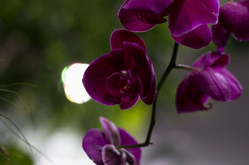 Flower Fragility Growth Nature Beauty In Nature Freshness Plant Close-up Petal Focus On Foreground Flower Head Orchid Outdoors No People Day