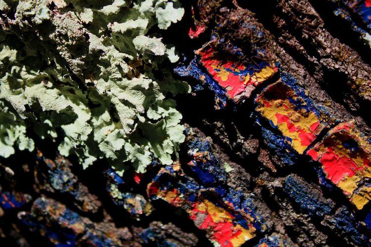 Full frame shot of lichen