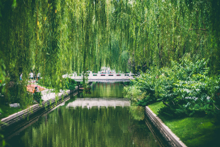 Beauty In Nature Canal Day Grass Green Green Color Growth Idyllic Lush Foliage Nature No People Non-urban Scene Outdoors Plant Reflection Remote Scenics Tourism Tranquil Scene Tranquility Travel Destinations Tree Water