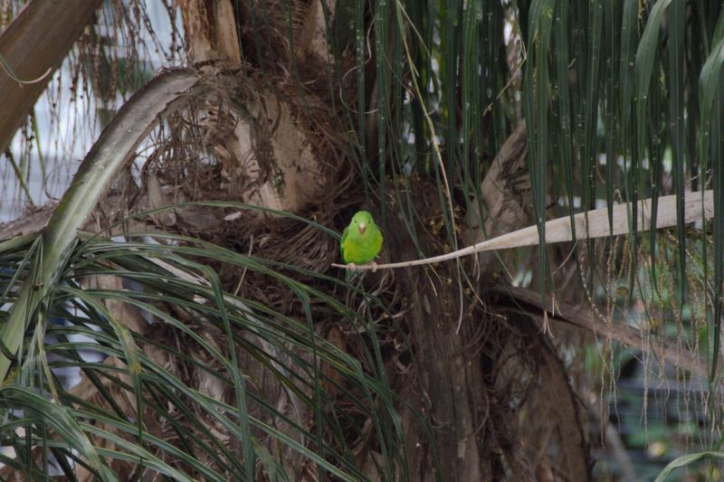 Bird Photography Beauty In Nature Bird Animal Themes Animal Plant Animal Wildlife Animals In The Wild No People Nature One Animal Day Tree Outdoors Perching Wood - Material Green Color