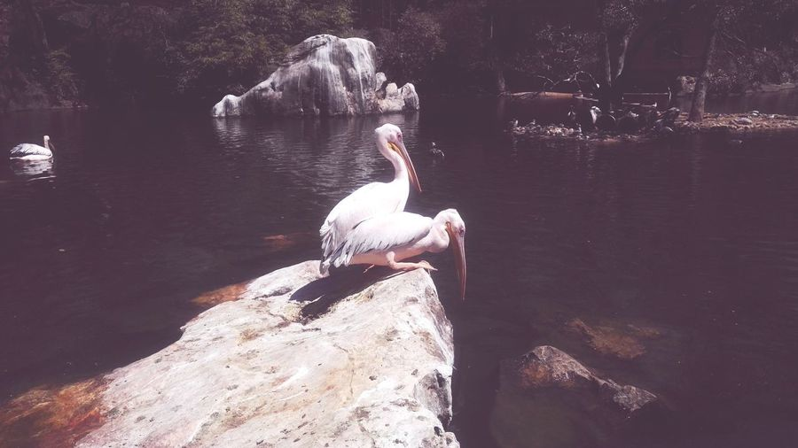 Water Animal Bird Vertebrate Animals In The Wild Animal Themes Animal Wildlife Lake Nature No People Day Rock Solid Reflection Outdoors Rock - Object One Animal