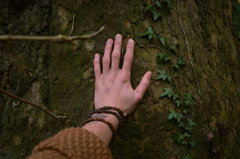 Cropped hand of man touching tree trunk in forest