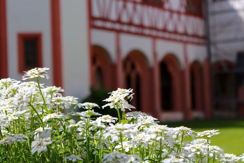 Kloster Eberbach Nature_collection Nature Photography Nature Monastery Summer Summer Flowers Flowers Flower Garden Garden Photography Garden Architecture