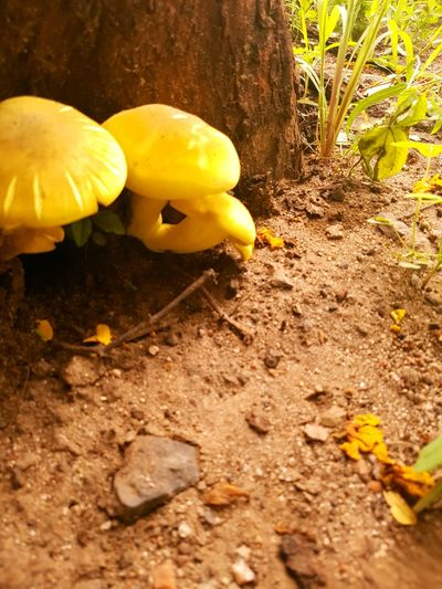 Colour Of Life Lovely Nature Bright Colours S7 Snap Yellow And Green Mushroom Mushrooms 🍄🍄 Beautiful Nature Daylight