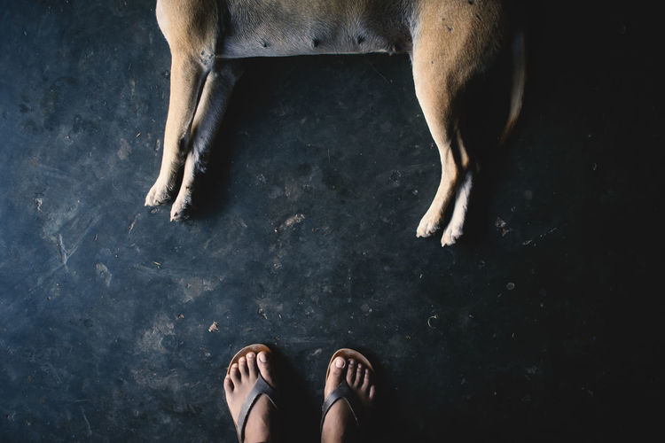 Low section of man standing by dog lying on floor