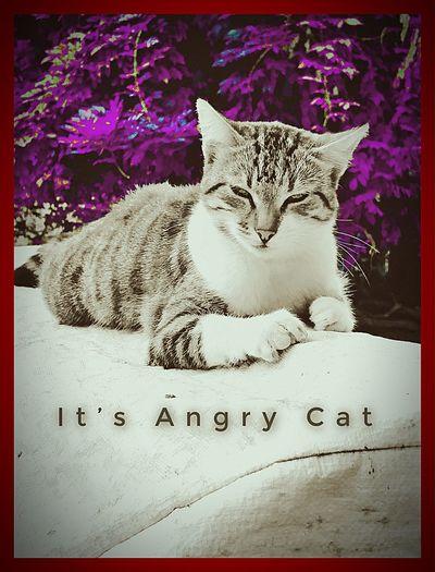 Cat Auto Post